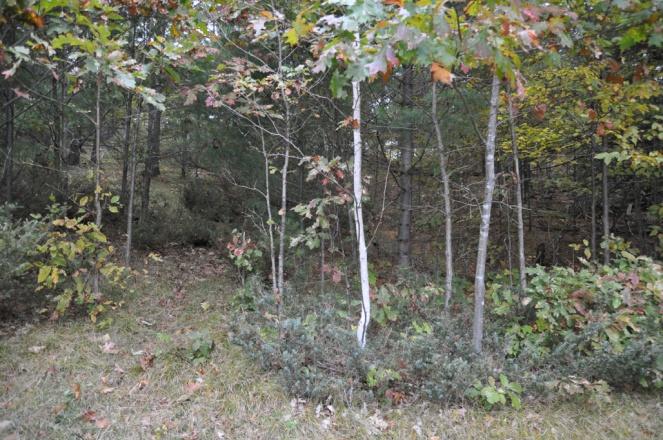 DSC_0536 meadow forest