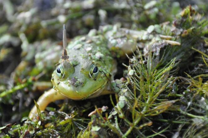 DSC_4088frog friend