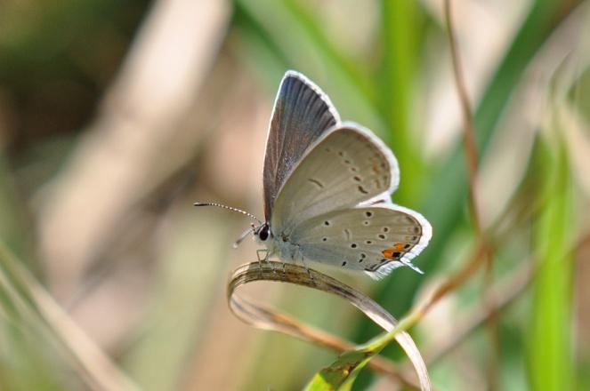 dsc_6081butterfly